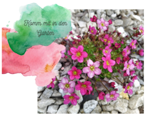 Komm mit in den Garten…