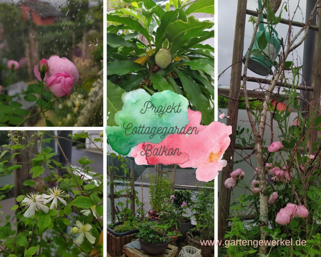 Cottagegarden Balkon Ramblerrose Zwergpfirsich Clematis Rittersporn Erdbeeren Himbeeren Tomaten