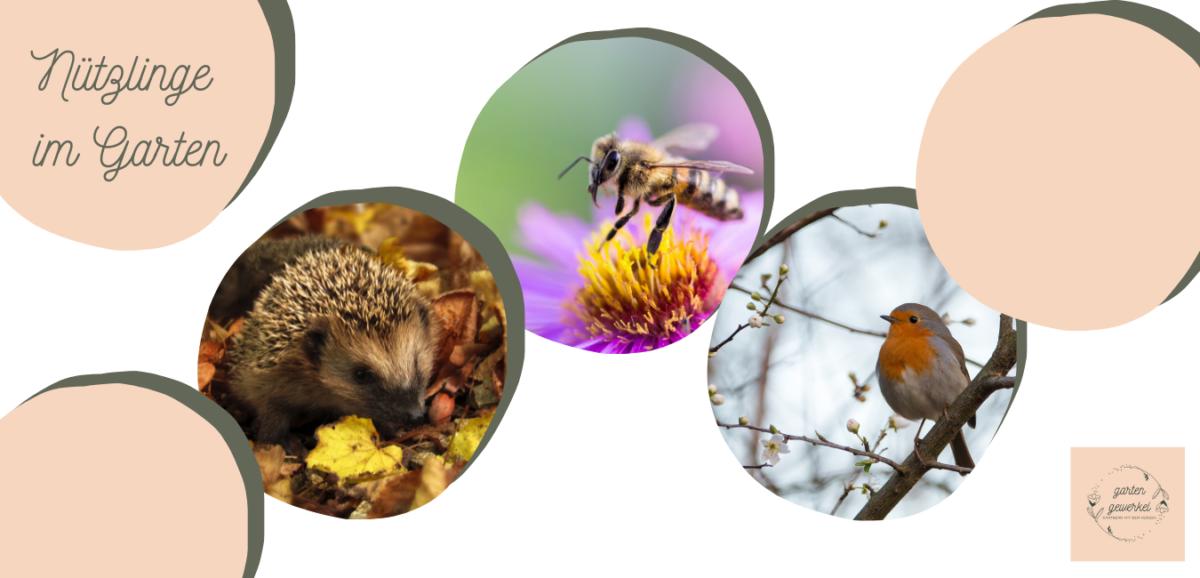 Naturnahe Gartengestaltung – Gute Lebensbedingungen für Igel, Insekten und Vögel schaffen