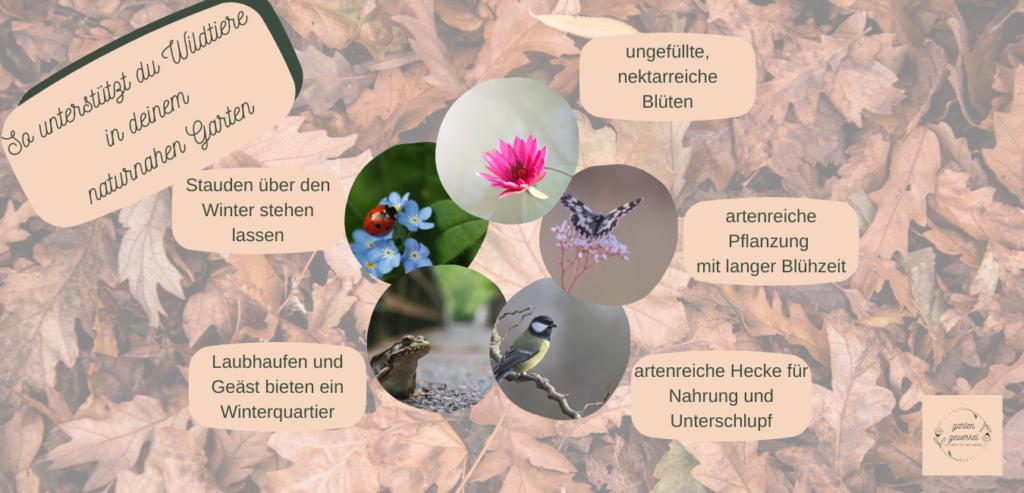 Tiere im naturnahen Garten  Naturnahe Gartengestaltung schafft optmalen Lebensraum für Igel, Insekten, Vögel und viele andere Nützlinge